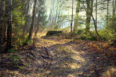 Lasowi sen Fotografia Stock