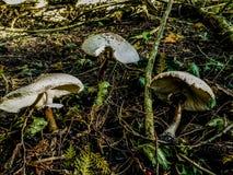 Lasowi shrooms zdjęcie royalty free