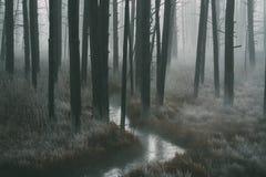 Lasowi spacery fotografia stock
