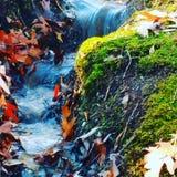 Lasowi spadki Obrazy Royalty Free