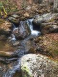 Lasowi spadki Fotografia Stock