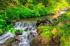 Lasowi strumieni pluśnięcia na kołysają kaskadę Obrazy Royalty Free