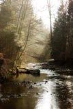 Lasowi strumienia słońca promienie Zdjęcia Royalty Free