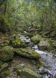Lasowi strumienie Obrazy Stock