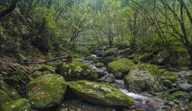 Lasowi strumienie Zdjęcia Royalty Free