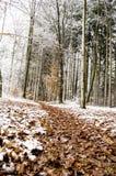 Lasowy ślad Obrazy Royalty Free