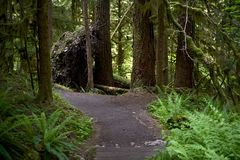 Lasowy ślad Obraz Stock