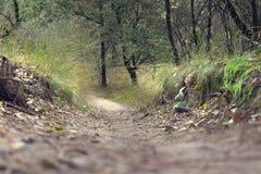 Lasowy ślad dla wycieczkować i jechać na rowerze zdjęcia royalty free