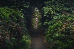 Lasowy ślad pod łukowatymi drzewami Zdjęcia Stock