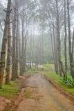 Lasowy ślad wśród deciduous i iglastych drzew na mgłowym Zdjęcia Royalty Free
