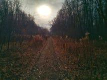 Lasowy ślad w jesieni świetle słonecznym zdjęcie stock