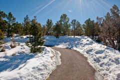 lasowy śnieżny ślad Zdjęcie Royalty Free