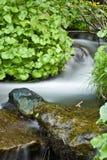 lasowy środkowy strumień Obrazy Stock