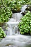 lasowy środkowy strumień Fotografia Royalty Free