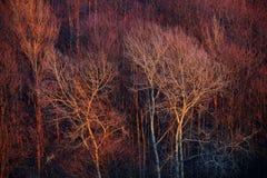 Lasowy areal widok przy zmierzchem Zdjęcie Royalty Free