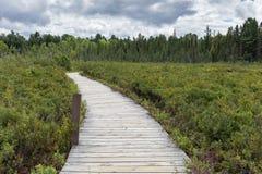 Lasowy bagna Boardwalk ślad Obrazy Royalty Free