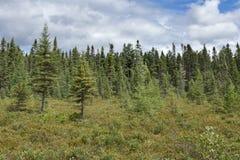 Lasowy bagna krajobraz Obrazy Royalty Free