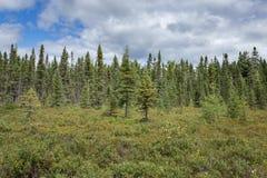 Lasowy bagna ślad Obraz Royalty Free