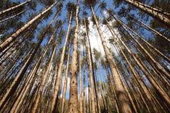 Lasowy baldachim Zdjęcie Royalty Free