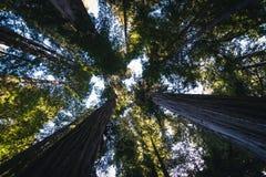 Lasowy baldachim Zdjęcia Stock