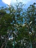 Lasowy baldachim Fotografia Stock