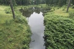 Lasowy basen latem Zdjęcie Stock