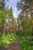 lasowy biegacz obraz stock