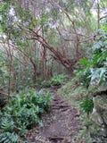 Lasowy brud ścieżki prowadzić oddolny zdjęcia stock