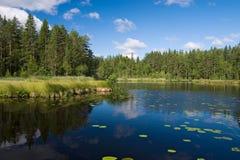 lasowy brzeg jeziora Zdjęcia Royalty Free