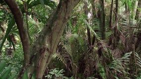 Lasowy dżungla zoom zdjęcie wideo