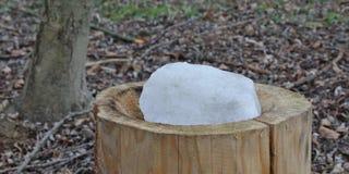 Lasowy dozownik z solą dla zwierząt Obrazy Royalty Free