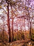Lasowy drzewo Obrazy Stock