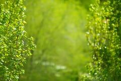 Lasowy drzewo Zdjęcie Royalty Free