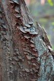 Lasowy drzewo Zdjęcie Stock