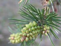 Lasowy drzewo obraz stock