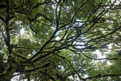 Lasowy drzewo przy natura śladem Zdjęcia Royalty Free