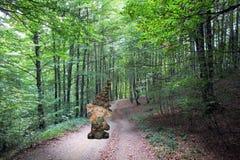 Lasowy elf Zdjęcia Royalty Free