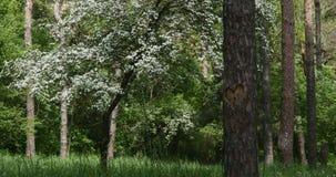 Lasowy fading w ciemność z sercem na drzewie zbiory wideo