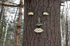 Lasowy faerie Zdjęcia Royalty Free