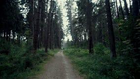 Lasowy filmowy widok zdjęcie wideo