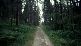 Lasowy filmowy widok zbiory