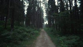 Lasowy filmowy widok zbiory wideo