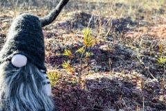 Lasowy gnom na mech Fotografia Stock