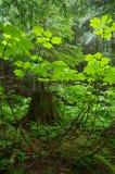 Lasowy Greenery fotografia stock