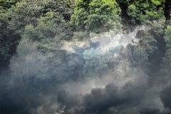 Lasowy grzmot Zdjęcie Royalty Free