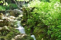 Lasowy halny strumień Fotografia Stock