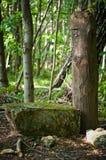 Lasowy idol Zdjęcia Royalty Free