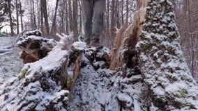Lasowy inspektor z krokami mierzył łamaną drzewną długość zbiory wideo