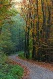 lasowy jesień ślad Obrazy Stock