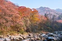 lasowy jesień strumień zdjęcie royalty free